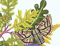 Moths & Larvae