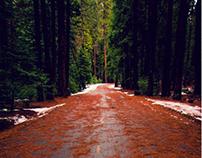 Landscapes | Yosemite