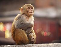 Kathmandu- Cinemagraphs