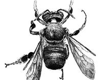 Rare Bees of Georgia