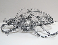 Wire Beetle