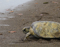 EcoTeach- SeaTurtle Service Learning, Costa Rica