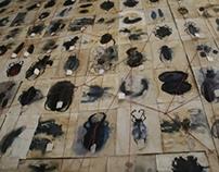 Darwins beetles.