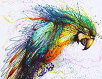 Color parrot 色彩鹦鹉