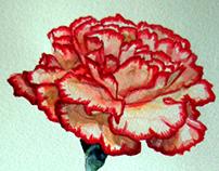 Watercolor Spot Illustrations