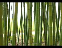 Bambuparque corporate presentation video