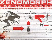 Alien Xenomorph lineage