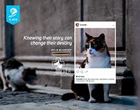 Young Lions Ecuador | Print | Pet-ID Microchip
