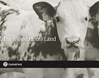 Cattle&Field