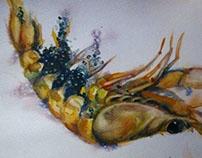 birth of a shrimp