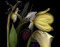 Botanicals 2004