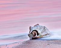Outer Banks Shells