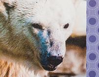 Polar Bear Groundbreaking invitation