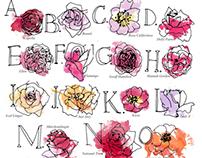 Rose Alphabet