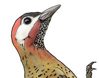Bird Observation Guide Illustrations