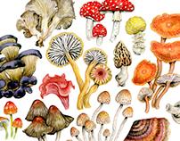 Mushroom & Salamander Pattern