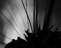 Black Botanic