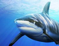 Requins, rencontre d'un autre type