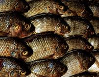Wasted Fish