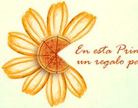 Primavera - Spring 2013
