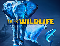 The Last Wildlife
