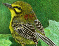 Illustrated National Audubon Society Stamp