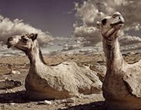 Desert Camelflage