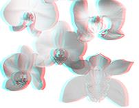 3D Orchid Print