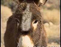 Absolut donkey