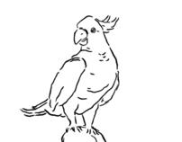 Optimist / Gonzo Illustration