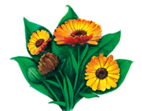 Chamel- Botanical Illustrations