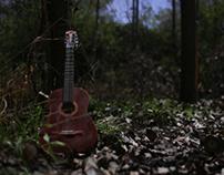 Raíz, en el bosque