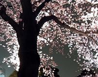 "'""SAKURA""  Tokyo you may dream"