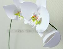 3D Paper Orchid