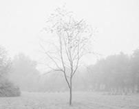 Morning, fog