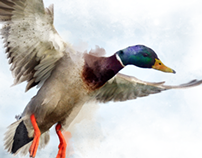 Digital Illustration - Mallard Duck
