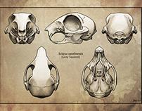 Animal Skull Prints