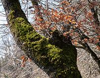 boschi ed alberi toscani