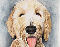 Goldendoodle Watercolor Painting