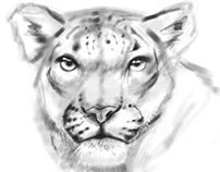 Snow Leopard Sketch