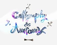 Calligraphy & Anatomy