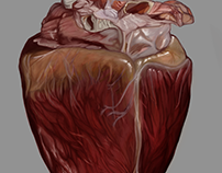 Anatomic Study - Heart with serous atrophy
