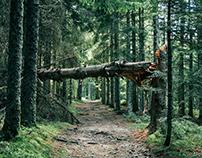 Grands bois du Pilat