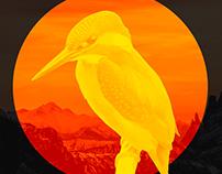 DailyUI 005 / App icon