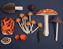 paper fungi