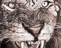 Male Lion -size 950 x 1460 -charcoal/graphite