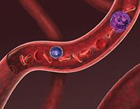 Hematology, 3d modeling