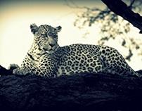 Journeys in Botswana (2)