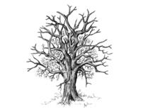 Wildlife Illustration - Black & White