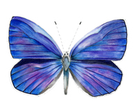 Wildlife Illustration - Colour